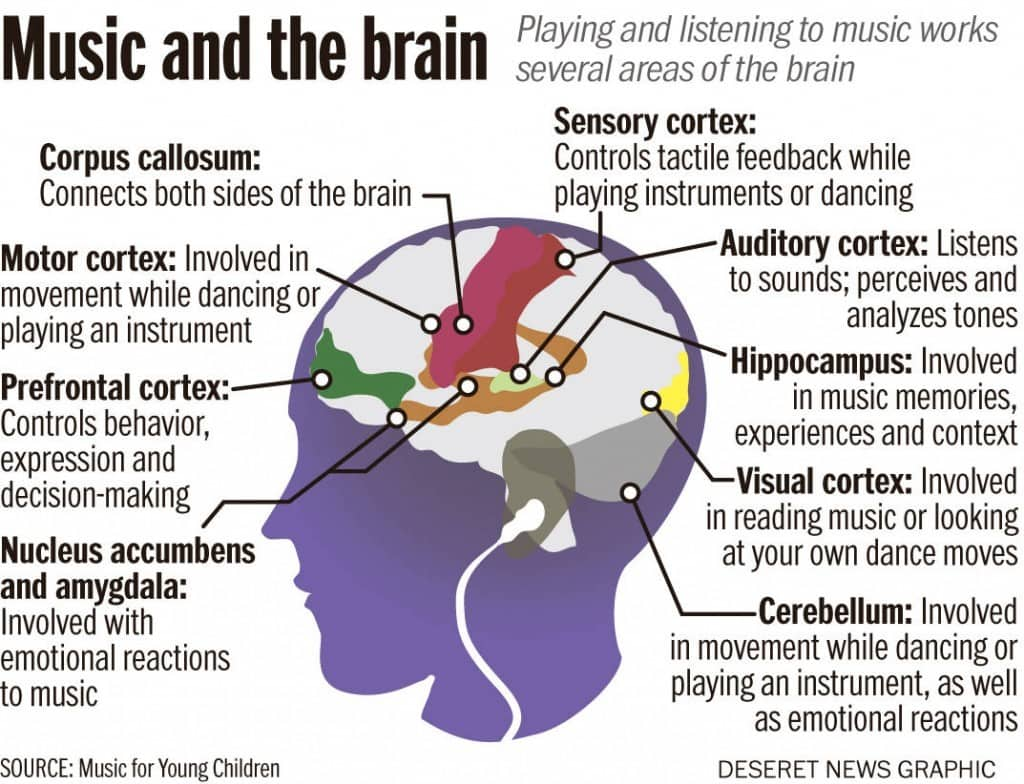 the brain of music